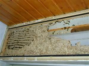 Wann Verlassen Wespen Ihr Nest : wespennest wann kann es bleiben wann sollte man nester umsiedeln ~ A.2002-acura-tl-radio.info Haus und Dekorationen