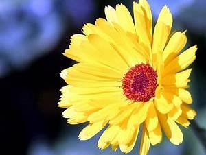 Bilder Blumen Kostenlos Downloaden : blumen bildschirm hintergrund 1360 x 1024 wallpaper hintergrundbilder kostenlos ~ Frokenaadalensverden.com Haus und Dekorationen