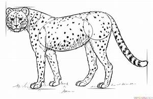 How To Draw A Realistic Cheetah Step By Step Drawing