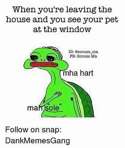 25+ Best Memes About Mha Hart Mah Sole | Mha Hart Mah Sole ...