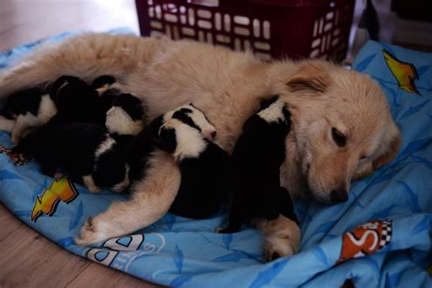 Orphaned Puppies United With Dog Who Lost Litter In Barn