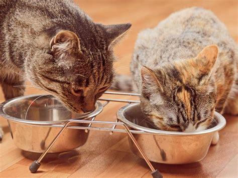 Zahnfleischentzündung Katze Behandeln