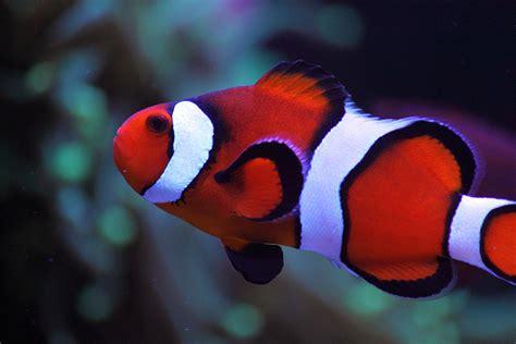 awpong  featured nano reef aquariums nano reefcom