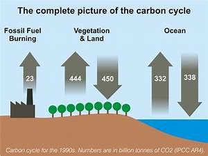 Complete Carbon Cycle