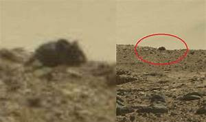 Giant Mouse found on Mars? Life on Mars confirmed with ...