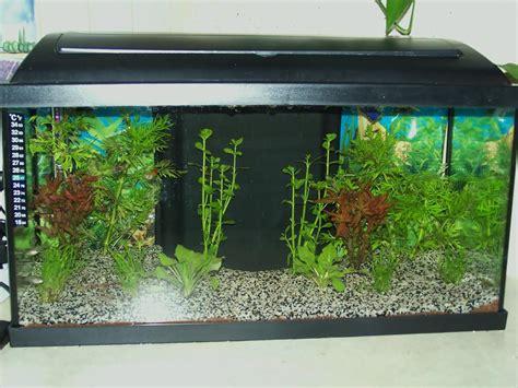 aquarium pacific 54 litres par pat72