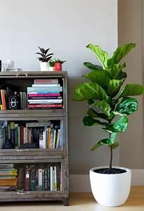 Pflanze Mit Z : pflanze mit gro en bl ttern ein herrlicher hingucker zu ~ Lizthompson.info Haus und Dekorationen