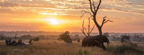 Trans Africa Safaris  Boutique Luxury Travel To Southern. Project Management Certificate Program. How To Make Your House Sell What Is A Dvd R. Painting Contractors Dallas Tx. Psychology Of Excellence Marketing Blog Sites. How To Form A Sole Proprietorship In California. Audi A9 Concept Vehicle Price. Best Anti Inflammatory For Knee Pain. Cortisone Injection For Acne A R Financing