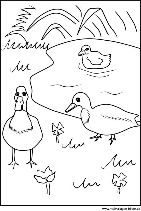 Gratis Malvorlage Von Enten Am Teich  Ausmalbilder Für Kinder