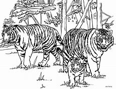 HD Wallpapers Tiger Family Coloring Page