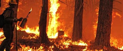 prevent sierra inferno thin clean forests california
