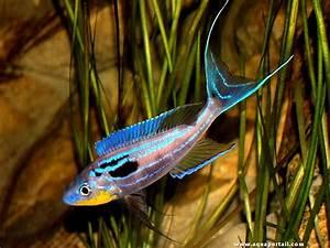 Poisson Aquarium Eau Chaude : poisson d eau douce chaude pour aquarium poisson naturel ~ Mglfilm.com Idées de Décoration