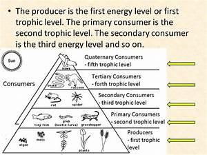 100+ [ Trophic Levels Worksheet ] | Food Webs And Energy ...