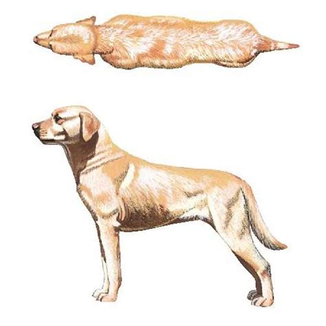 dog overweight    exercise