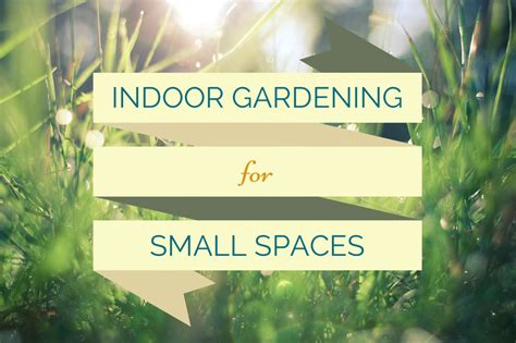 indoor gardening for small spaces mpls rent