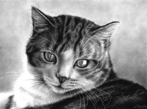 20+ Beautiful Realistic Cat Drawings To Inspire You Fine