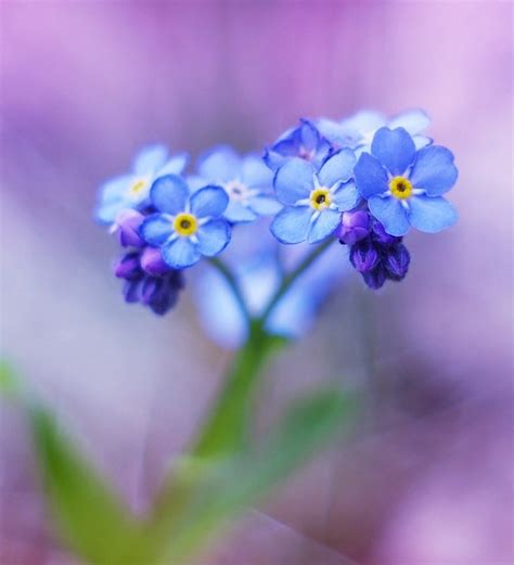 tiny blue flower little blue flowers ii by justine1985 on deviantart