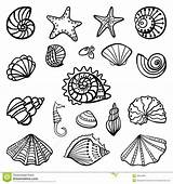 Shells Coloring Pages Beach Print sketch template