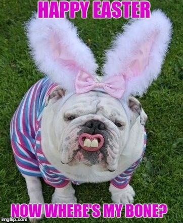 Funny Happy Easter Memes - dog meme funny dog memes easter dog meme dog blog bullwrinkles bullwrinkles usa