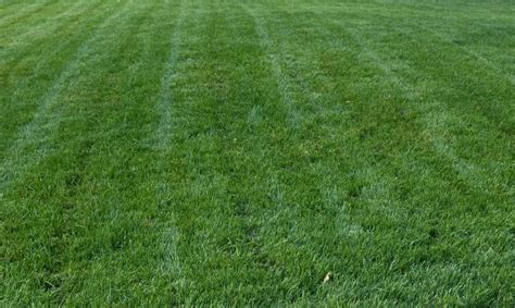types of fescue grass titan rx turf type tall fescue grass seed 1 lb ebay
