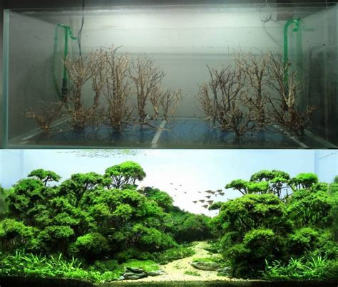 Freshwater Aquascape Ideas by Before And After Freshwater Aquascape Freshwater Fish