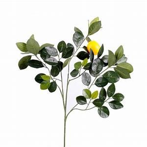 Prix D Un Citronnier : fruit exotique de decoration prix achat vente en ligne ~ Premium-room.com Idées de Décoration
