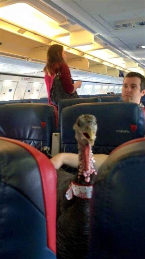 passenger takes turkey  delta flight  emotional