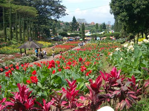 objek wisata kebun bunga  menarik  jalan jalan