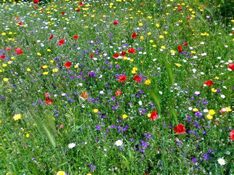 immagini prato fiorito prato fiorito dall appennino alle alpi apuane 187 la