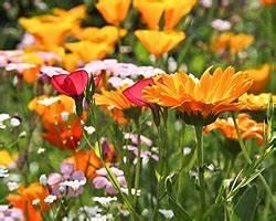 Blumen Für Schatten : einj hrige und zweij hrige blumen sonne halbschatten ~ Lizthompson.info Haus und Dekorationen