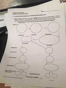 Solved  Meiosis Activity  Diagram The Process Of Meiosis U