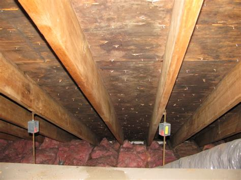 attic mold remediation expertstoxic black mold removal ma