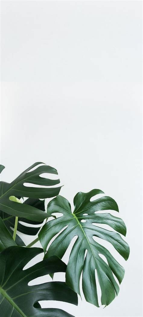 Download and use 10,000+ green wallpaper stock photos for free. HD Aesthetic Minimal Plant Phone Background | Leaves wallpaper iphone, Plant wallpaper ...