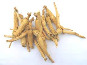 where can you buy sugar cubes buy ginseng root tea benefits how to make side effects