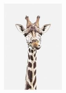Baby Giraffe, Poster
