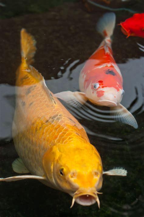 keeping  pet rope fish