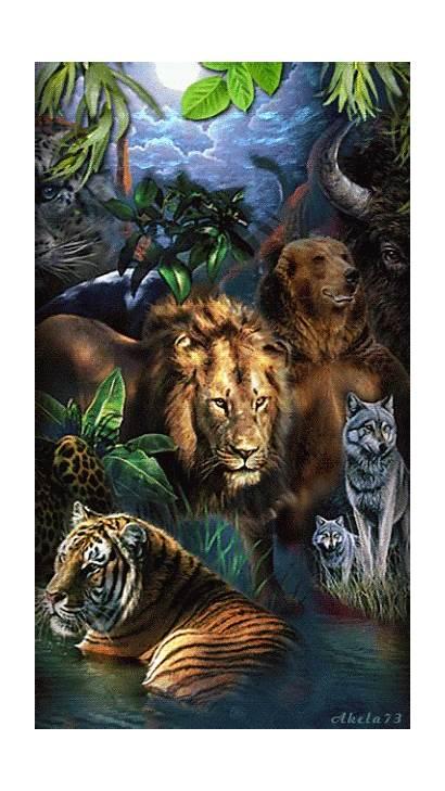Animals Wild Jungle Animal Animales Mix Nature