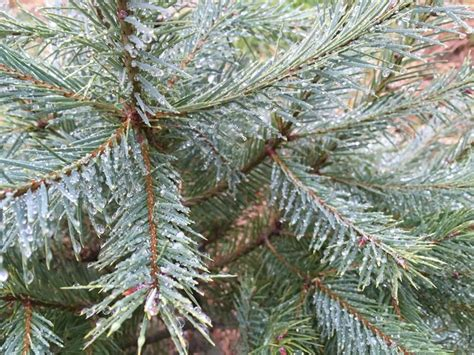 christmas tree farms in topsfield ma where you can cut down trees welcome to crane neck tree farm