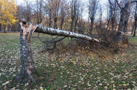 Vētras postījumu sekas kopumā novērstas   liepajniekiem.lv