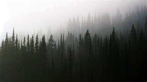 Foggy Evergreen Forest Wallpaper El Nuevo Twin Peaks Es Aún Mejor De Lo Que Nadie Pensaba Refugio Antiaéreo