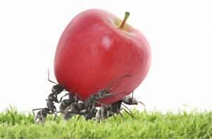 Mittel Gegen Ameisen Im Rasen : mittel gegen grasmilben gesucht grasmilben bek mpfen so geht s ~ Watch28wear.com Haus und Dekorationen