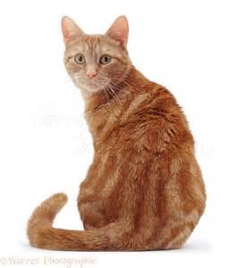 cat sitting cat sitting looking shoulder photo wp05858