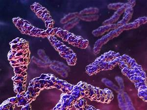 Chromosome  Its Parts  Functions And Types  1934 Words