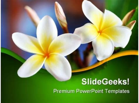 frangipani flower beauty powerpoint templates