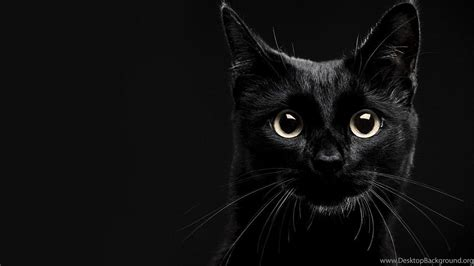 lucky black cat wallpapers desktop background