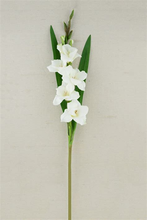 gladiolus flower 33in