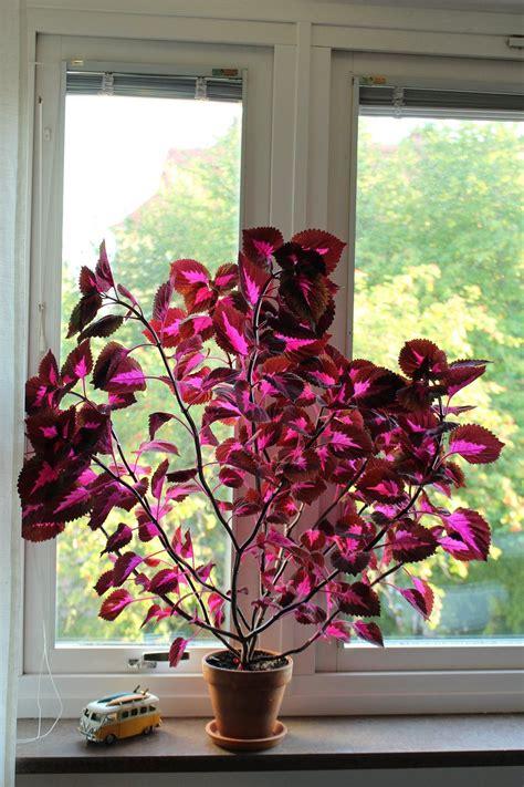 China Garten Pflanzen by Palettblad China Plants Gr 252 Npflanzen Garten