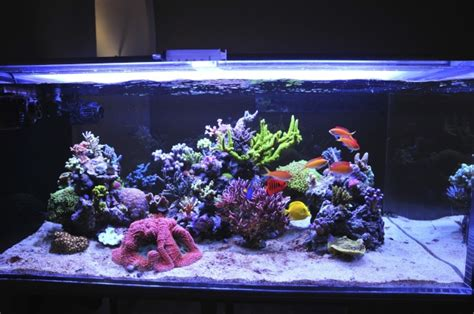 how do you clean your acrylic tank reef central community