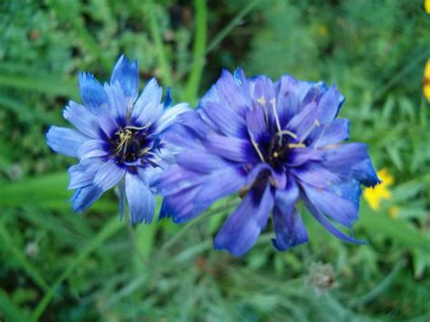 types of blue flowers best wedding flowers types of blue flowers