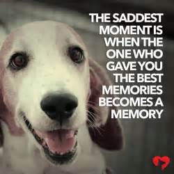 dog quotes  sayings